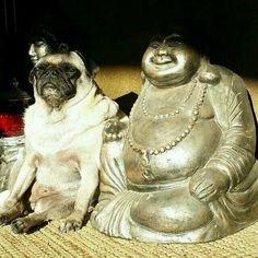 Boeddha mopshond/pug