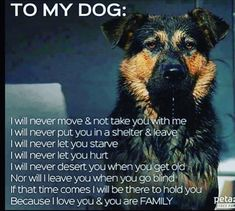 My dogs are my babies, they are my family.