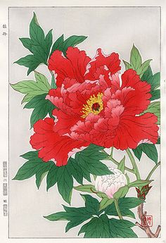 Shodo Kawarazaki Japanese Woodblock Print Red Peony 1954 First Edition RARE… Asian Flowers, Oriental Flowers, Japanese Flowers, Japan Illustration, Japanese Prints, Japanese Art, Red Peonies, Japanese Painting, Flower Wallpaper