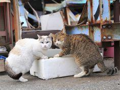 <b>泥棒猫</b><br> 意味:こっそり悪いことをする。<br> 隠れて盗み食いする猫の様子を例えにした言葉です
