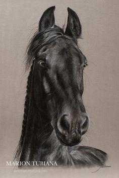 fullscreen; Marion Tubiana – Horse Pastels frison