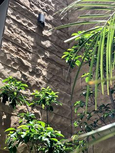 Natural stone wall covering