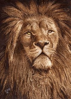 """I love the mussed up mane in """"Lion 2"""" Pyrography on Paper. by Clive Smith."""