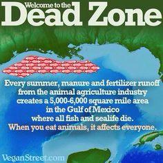when you eat animals, it affects everyone #vegan #vegetarian