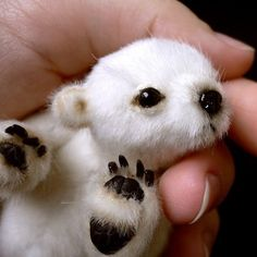 Actually not a real baby polar bear (a toy or handmade furry), but still super cute! -theknittycat Cutest little thing ever!! Baby Polar Bear!