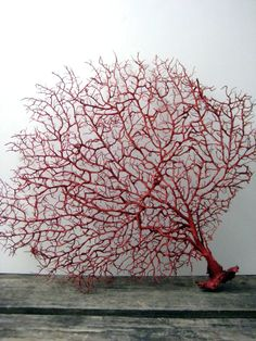 Red Sea fan in resin if you please. Perfect backdrop for my benthic friends to cling to or what?!