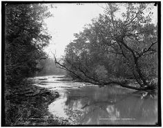 Canaseraga River Creek Trees Poags Hole Water Bodies Dansville New York NY C1900