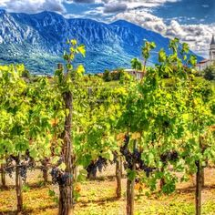 Vineyard in the village of Slap in the Vipava Valley Best Kept Secret, The Locals, Countryside, Vineyard, To Go, Europe, Mountains, Explore, Nature