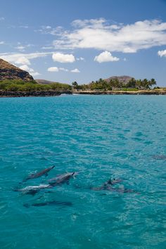 Swimming with Spinner Dolphins and Sea Turtles at Waianae on the west coast Hawaii.