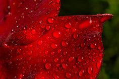 """Red Rain"" photo by Penny Meyers.  Fine art prints and greeting cards from Fine Art America."