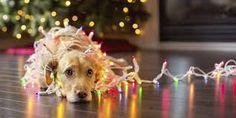 Αποτέλεσμα εικόνας για christmas pictures