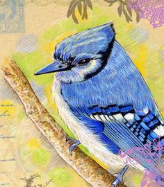 Greeting Card Art Blue Jay by roxy5235 on Etsy, 2.99