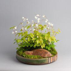 Arrangements Ikebana, Flower Arrangements, Moss Garden, Garden Plants, Indoor Garden, Indoor Plants, Christmas Fern, Marsh Marigold, Creeping Phlox