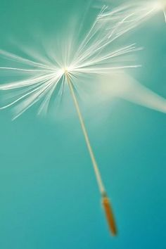 Lighter than air, softer than the softest touch...♏