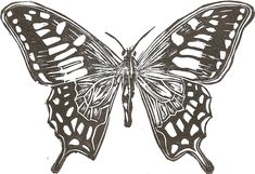 ARTFINDER: Butterfly by Jenni Thirlwell (linocut)