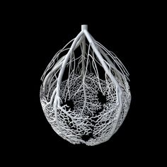 hyphae3d2 | Flickr - Photo Sharing!