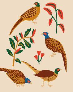 Faisans Illustration, Rooster, Animals, Frames, Animaux, Illustrations, Animal, Animales, Animais