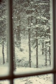 The New Victorian Ruralist: A path through the snow...