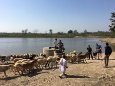 Cycling trip guest with cattles and locals Cycling Tours, Rural India, Outdoor Furniture Sets, Outdoor Decor, Bike Rides