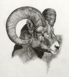 ~ Ram, graphite on paper by Heather Theurer ~ Aries ~