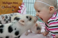 Michigan Mini Juliana Pigs is a very small hobby breeder of the smallest breed of pig- the Juliana. We have just one sow, one boar and only have one or two . Baby Piglets, Cute Piglets, Cute Baby Animals, Funny Animals, Farm Animals, Funny Babies, Cute Babies, Juliana Pigs, Pig Breeds