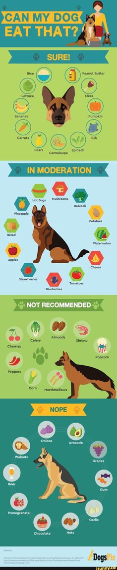 Safe Human Food For Your Dogs Info Graphic - Tap the pin for the most adorable pawtastic fur baby apparel! You'll love the dog clothes and cat clothes! Everything you want to know about GSDs. Training, health and beauty recommendations. Funny videos and Dog Care Tips, Pet Care, Animals And Pets, Cute Animals, Dog Facts, Dog Eating, Dog Training Tips, Dog Mom, Yorkie
