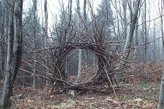 "Random Act of Creepy Funny... & art: ""i come across a strange structure deep in the woods and am left to wonder how and why ....thats probably a portal to something from the blair witch project, wtf!"" LOL=)  #KentuckyCoffeetree #Kentucky"