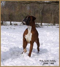 #boxerdogsgifts