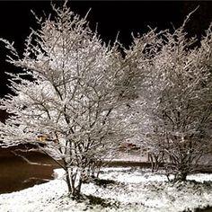 Schnee bei Nacht / Snow at Night
