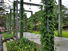 Jakob Green Solutions, Cable Trellis | Tensile Design & Construct