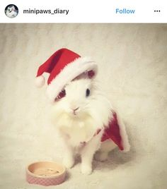 christmas_rabbit_santa_bunny