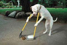 Entrenamiento para que tu perro haga sus necesidades conoce más en http://animalcare.com.mx/necesidades-perro-fuera-de-casa/- Animal Care