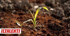 Kahvinpuruja ei kannata heittää biojätteeseen suodatinpussista, sillä niitä voi käyttää näppärästi apuna kodin pienissä askareissa. Hygge, Herbs, Health, Garden, Plants, Diy, Ideas, Garten, Health Care