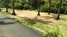 Land & Plots | 11 cent Residential plot Thalikulam,