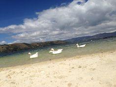 El verano es alegría !!! Venga a compartir La mejor temporada de el año con nosotros.  Visita el Lago de Tota !!   http://cabana-lago-de-tota.webnode.com.co/