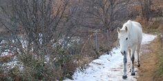 Activada la fase de alerta en las provincias de Cuenca y Guadalajara por nieve y bajas temperaturas