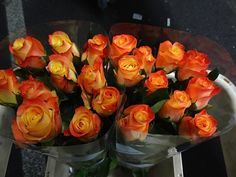 #Rose #Florida; Available at www.barendsen.nl