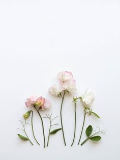 http://humphreyandgrace.co.uk/sweet pea flowers