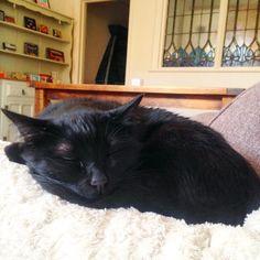 instagram @carltonandfoot Morning y'all. 09:17am, napping.  Busy-busy. 🖖🏽 #pet #cat #catofinstagram #petstagram #neko #nekostagram #chat #catstagram #catlady #cats #caturday #carltonandfoot #catlife #ilovemycat #blackcat