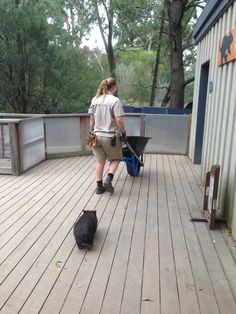 Keeper Julie goes about her morning duties while gorgeous one year old Shadow 'shadows' her.