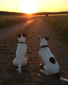 watching sunset jrt