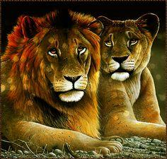Decent Image Scraps: Animals 1