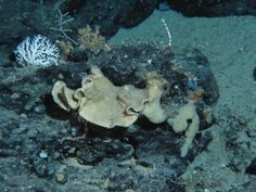 A deep-water marine sponge collected off of Fort Lauderdale's coast contains…