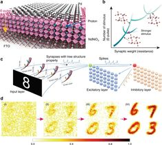 Perovskite neural trees | Nature Communications Tree Structure, Number Theory, Electric Field, National Laboratory, Neurons, Trees, How To Apply, Nature, Nerve Cells