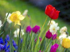 Resultat d'imatges de flores de primavera