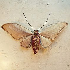 moth by Mister Finch