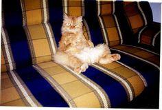 Leo é o gato da Marta Teodora.