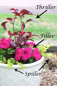 """To provide visual interest to a container garden, follow the concept of planting flower pots """"Thriller Spiller Filler"""". In that, you have to combine plants of different heights and sprawling habit in each pot."""