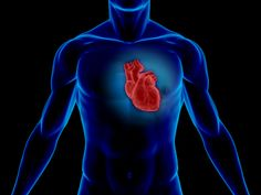Many epidemiological studies have shown that too much homocysteine in the blood and vitamin deficiency is related to a higher risk of cardiovascular disease. Heart Symptoms, Enlarged Heart, Heart Palpitations, Vitamin Deficiency, Heart Failure, Cardiovascular Disease, Heart Health, Gut Health, Angina Pectoris