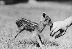littlest/deer/ever...